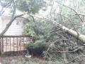 tree-wreck